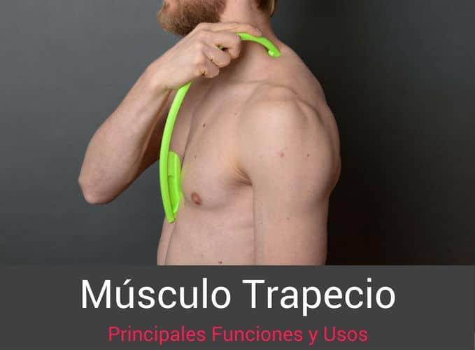 Musculo-Trapecio-Funciones
