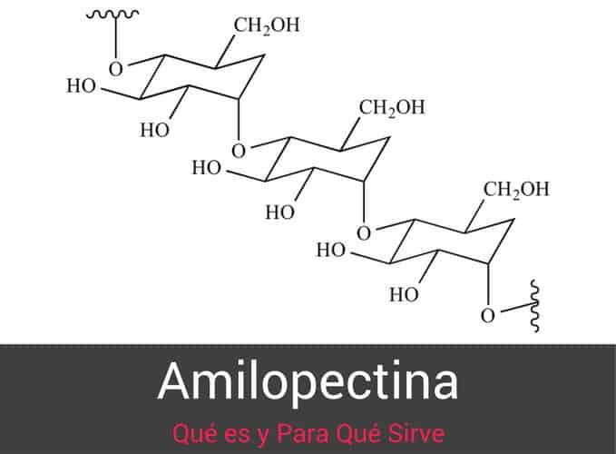 Amilopectina Propiedades y Para Que Sirve