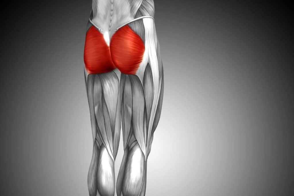 Músculo del glúteo